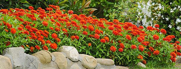 8 plante care resping țânțarii