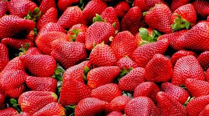Când se coc căpșunele?