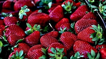 Când se plantează căpșunii atârnători?