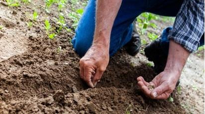 Care este momentul ideal pentru plantarea semințelor?