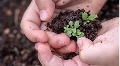 Ce semințe germinează la întuneric?
