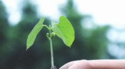 Ce semințe germinează la lumină?
