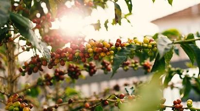 Cum păstrezi mini-pomii fructiferi până la plantare?
