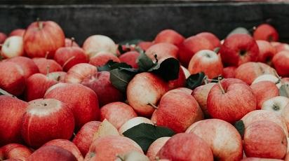 Cum se plantează mărul columnar?