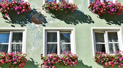 Pot înmulți garofițele în jardiniere?