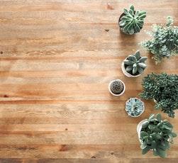 10 plante de apartament benefice pentru sănătatea ta