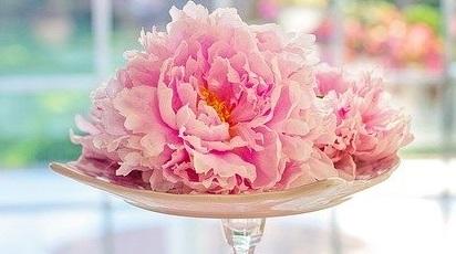 5 sfaturi practice despre plantarea și îngrijirea bulbilor de bujori