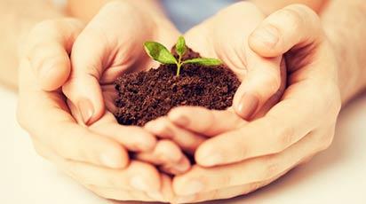Alegerea solului pentru plante: iată ce trebuie să știi!