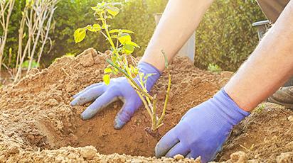 Beneficiile plantării de toamnă pentru grădina ta