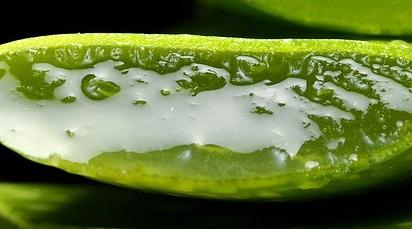 Beneficiile utilizării plantei de aloe vera