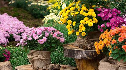 Când plantăm bulbii de flori de toamnă. Pregătirea grădinii pentru anul viitor