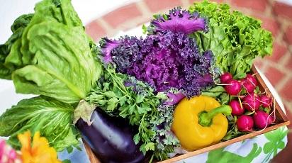 Catalogul Grădina Max s-a extins! Noi soiuri de semințe așteaptă să fie descoperite