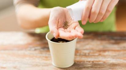 Ce legume poți planta în luna februarie: checklistul grădinarului
