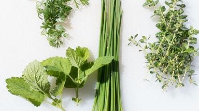 Ce plante naturale nu trebuie să-ți lipsească din grădină