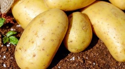Cultivarea cartofilor. Sfaturi și recomandări pentru o recoltă bogată