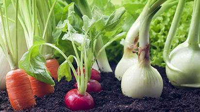 Cum alegi locul legumelor în grădina ta