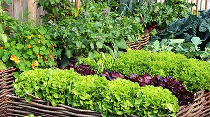 Cum amenajezi grădina de legume pe paturi ridicate în solarii