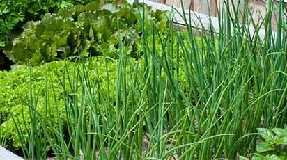 Cum amenajezi o mini-grădină de verdețuri în balcon