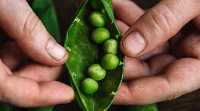 Cum extragi seminţele pentru replantare în câţiva paşi simpli