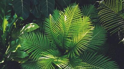 Cum îngrijești cea mai cunoscută plantă de interior. Tot ce trebuie să știi despre ferigă