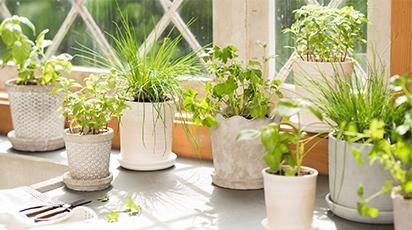 Cum îți dai seama că planta ta e în repaus vegetativ