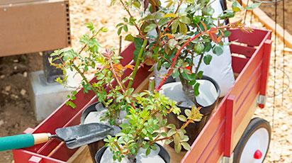 Cum păstrezi răsadurile sănătoase până la plantare