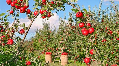 Cum poţi să-ţi amenajezi grădina toamna