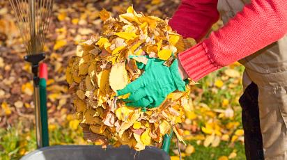 Cum pregătești grădina în sezonul de toamnă: sfaturi de bază