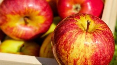 Cum să recoltezi merele eficient. Metode și echipament