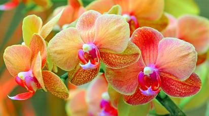 Cum se cultivă orhideele: 7 sfaturi simple pentru începători