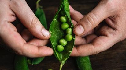 Cum se plantează și îngrijește cultura de mazăre: sfaturi pentru recolte bogate