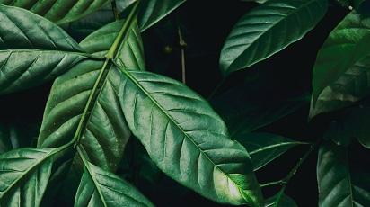 De ce ai nevoie de plante care purifică aerul
