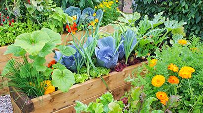 Debutul toamnei: 10 sfaturi pentru grădinarii începători