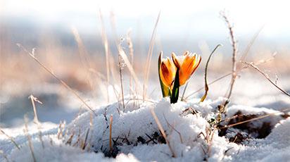 Flori din grădina ta de care te poți bucura și iarna. Ce flori poți planta în noiembrie