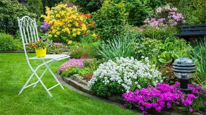 Flori perene pentru o grădină care se întreține ușor