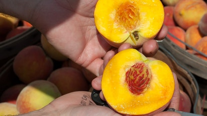 Ghid complet pentru cultivarea și îngrijirea piersicului