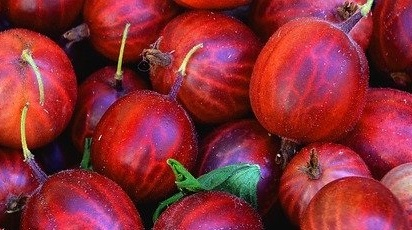 Ghid practic pentru înmulțirea argrișului prin semințe, butași sau altoire