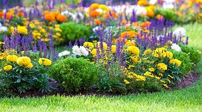 Grădina de flori toamna: ce faci pentru a-ți păstra florile și anul următor