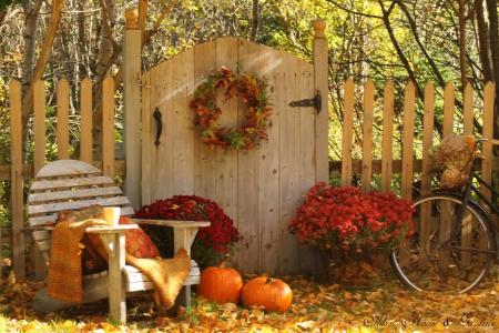 Grădinăritul în noiembrie