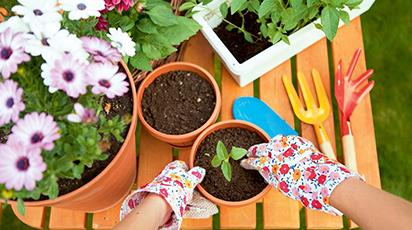 20 de idei-cheie de pus în practică înainte de începerea sezonului de plantare