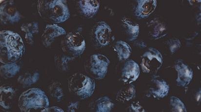 Înmulțirea afinului în grădină: sfaturi utile pentru începători