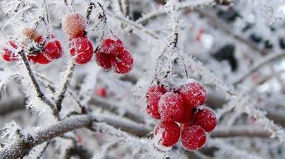 Întâmpină noul an grădinărește! Activitățile specifice lunii ianuarie