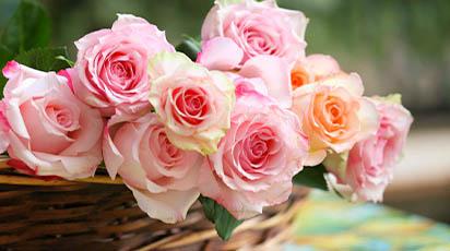 Lucrări de îngrijire a trandafirilor în luna noiembrie