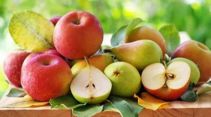 Lucrările de întreţinere şi îngrijire a pomilor fructiferi