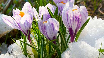 Luna februarie în grădină: primul lucru pe care să îl faci după topirea zăpezii