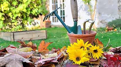 Luna noiembrie în grădină: 3 lucruri la care nu te-ai gândit
