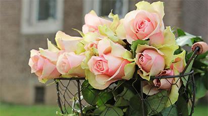 Top 3 metode eficiente de înmulțire a trandafirilor prin butași