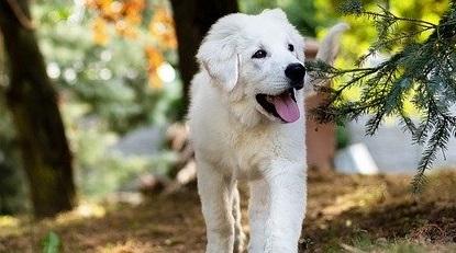O grădină prietenoasă pentru câinele tău: sfaturi utile