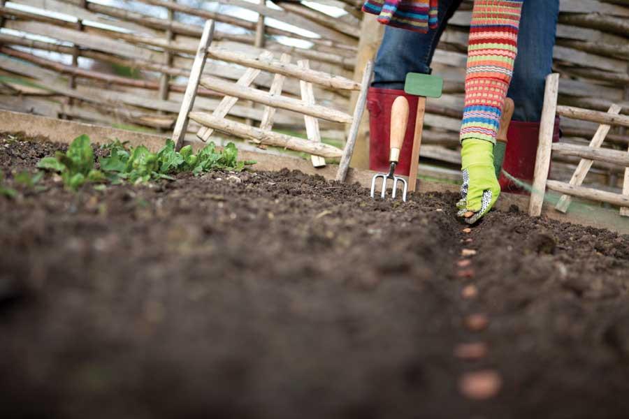 Perioada ideală de plantare a legumelor de primăvară