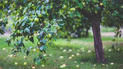 Plantarea pomilor fructiferi: 9 reguli esențiale pentru livezi roditoare